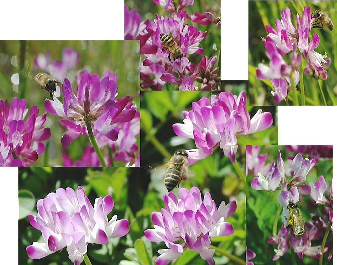 ミツバチ群