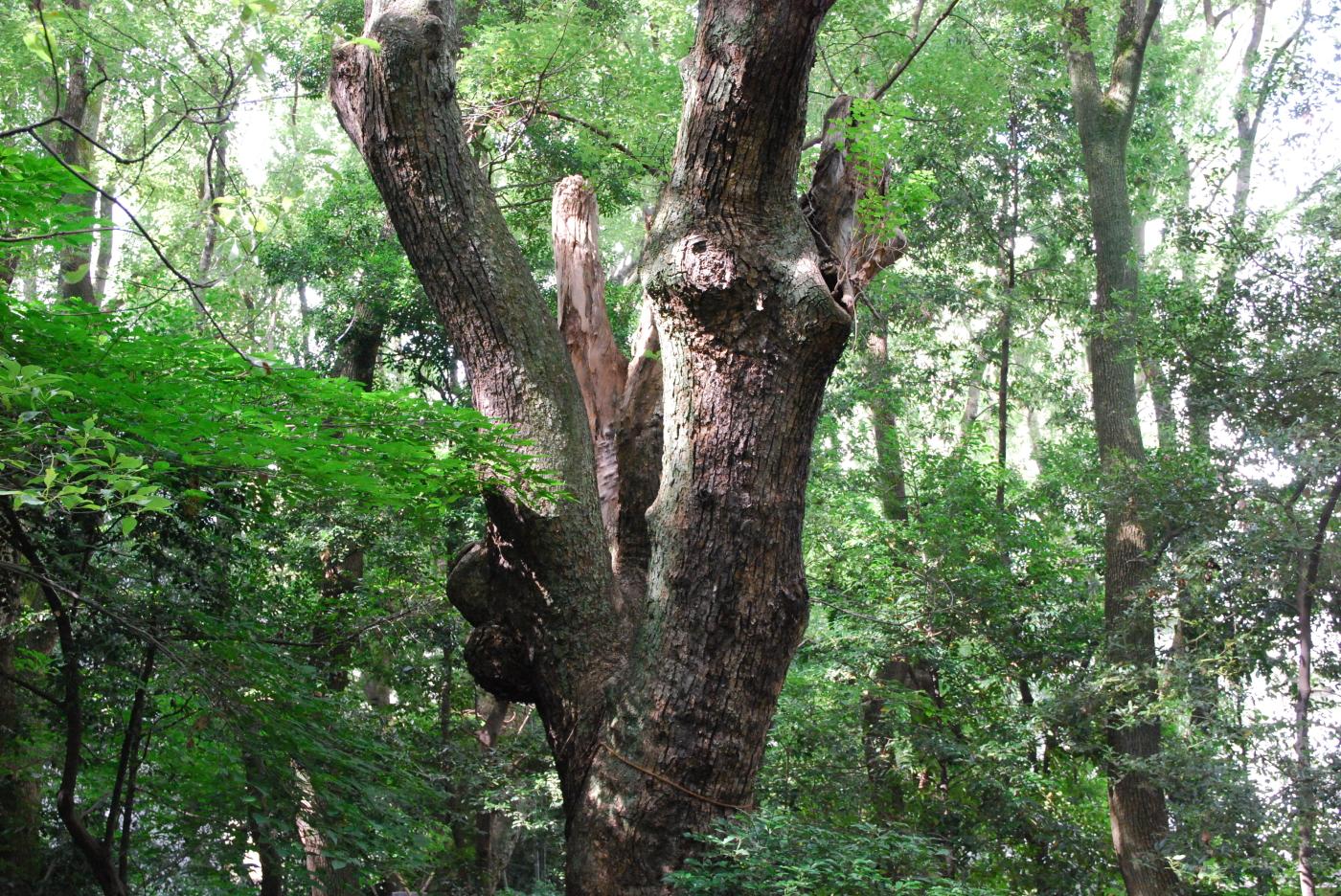 生田の森0704