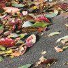 春の落ち葉